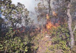 Siguen activos dos incendios forestales en las sierras de la región Sureste