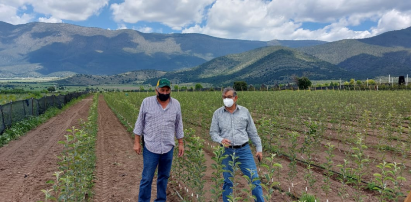 En la Sierra de Arteaga apoya estado 40 mil árboles de manzano