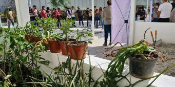 Aprenden Lobos al Rescate a instalar Jardines con Plantas del Desierto