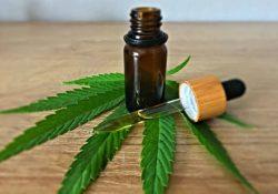 Promueven el uso medicinal de la cannabis